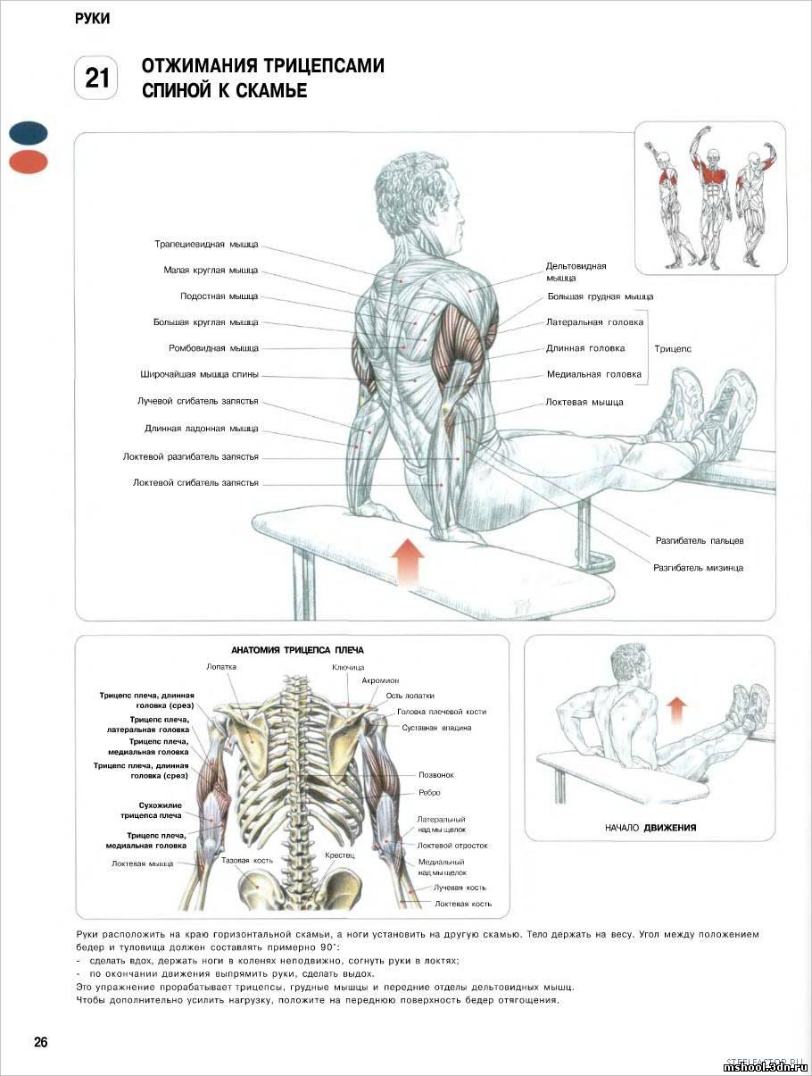 Как накачать мышца рук в домашних условиях